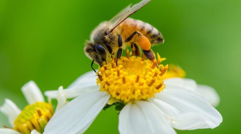 راهی برای درک مغز انسان با استفاده از زنبور ها کشف شد