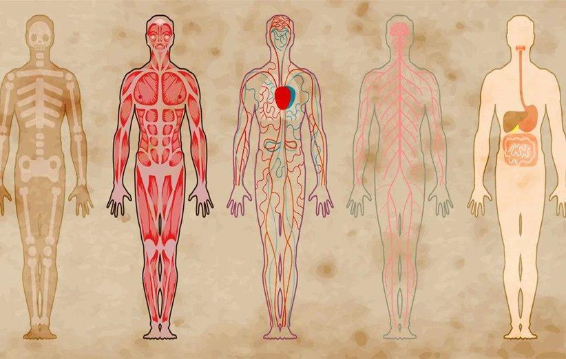 11 نقطه باورنکردنی در بدن که محل زندگی باکتری ها هستند
