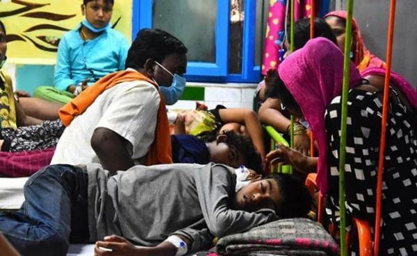 تور هند ارزان: دینگو 60 هندی را به کام مرگ کشاند